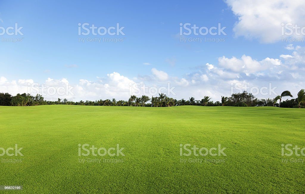 Green field of grass and trees royalty-free stock photo