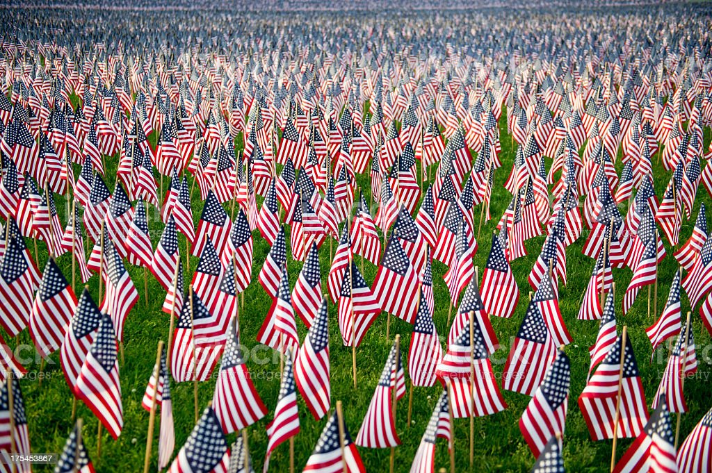 Green field of United States of America flags stock photo