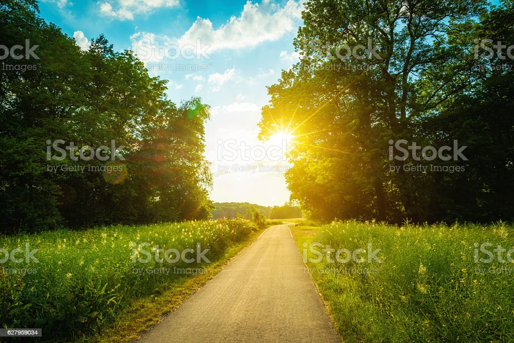 Green field on a sunny afternoon stock photo
