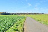 Green field on blue sky (6)
