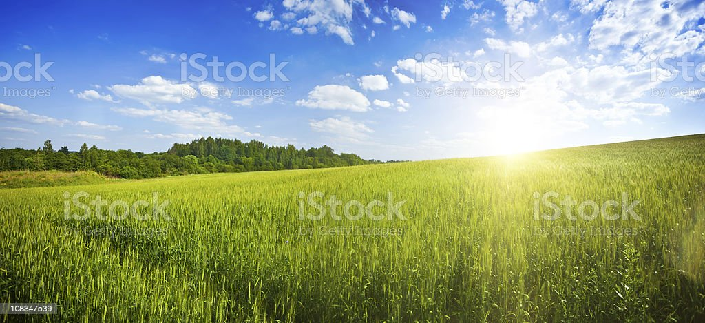 Green field over blue moody sky stock photo