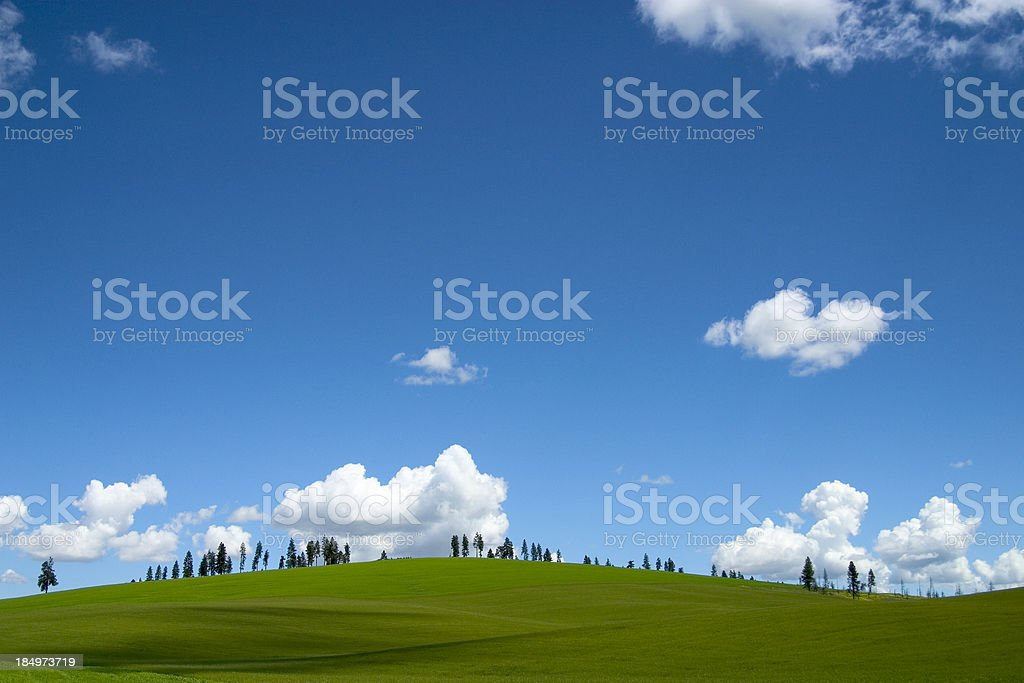 Green field stock photo