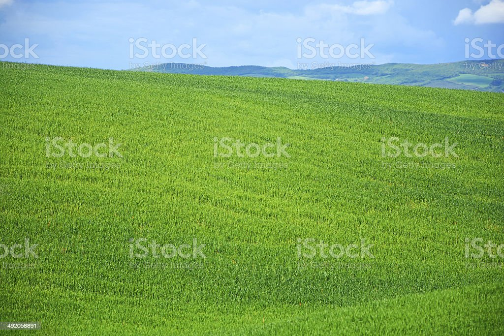 Green field royalty-free stock photo