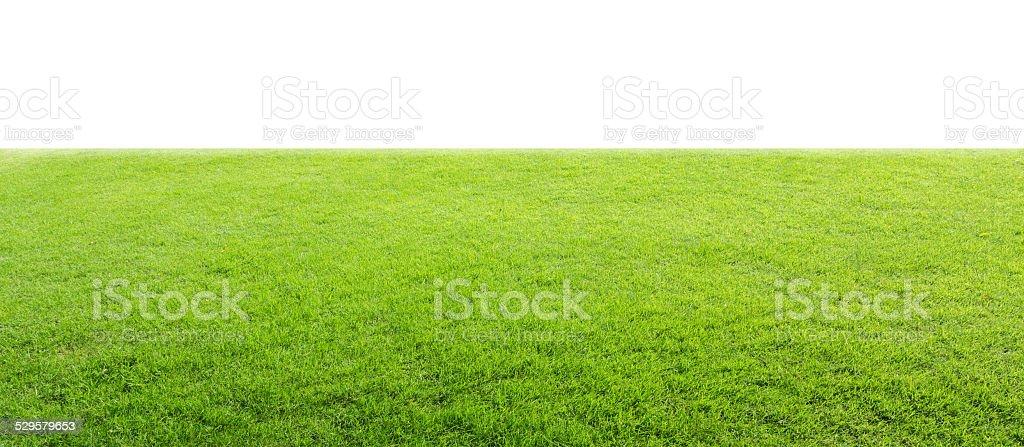 Green field stock photo