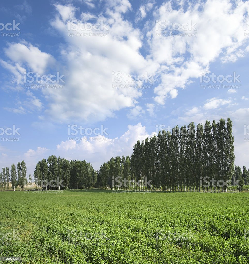 Green Field, Trees Lines And Blue Sky stock photo