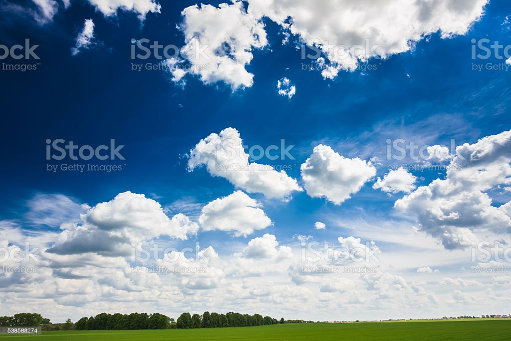 Green Field Under Blue Sky. Agricultural Background. stock photo