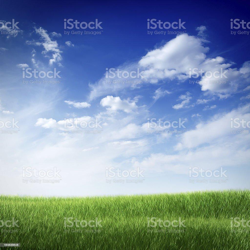 Green field under blue sky stock photo