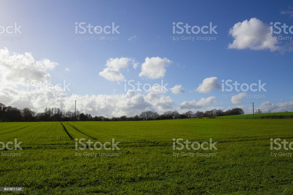 Green field view with beautiful clean sky stock photo