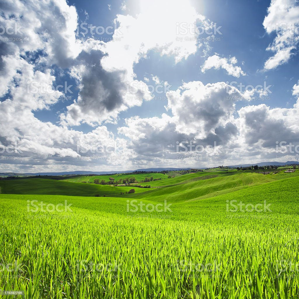 Green Field Weat stock photo