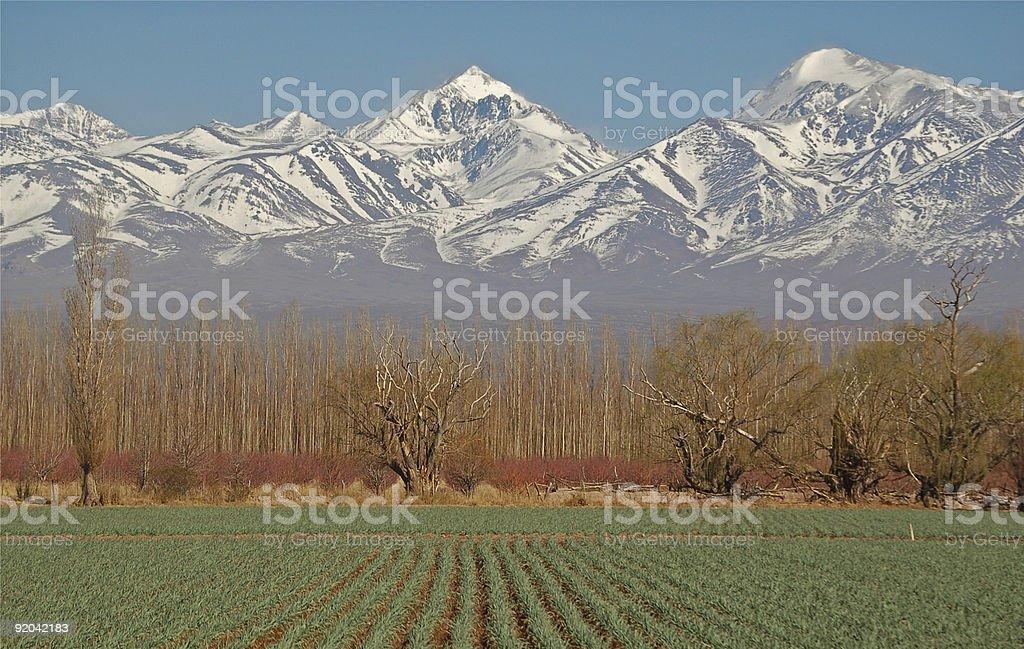 Green field, white mountain peaks royalty-free stock photo