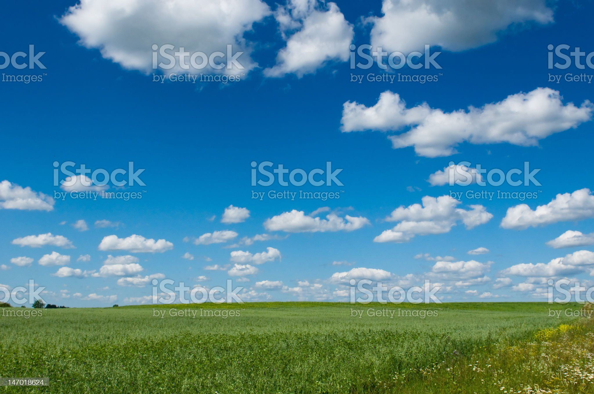 green field with blooming flowers and blue sky royalty-free stock photo