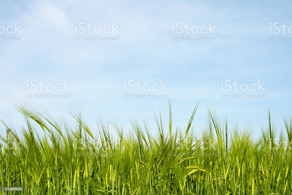 Green field with blue sky graphic stock photo