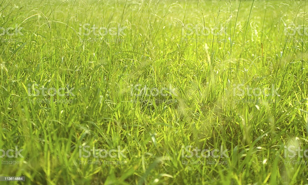 green field with light royalty-free stock photo