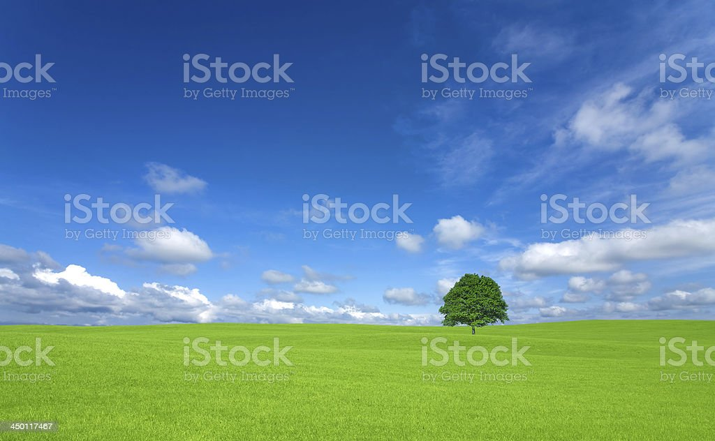 Green field with lone tree and white cloud stock photo