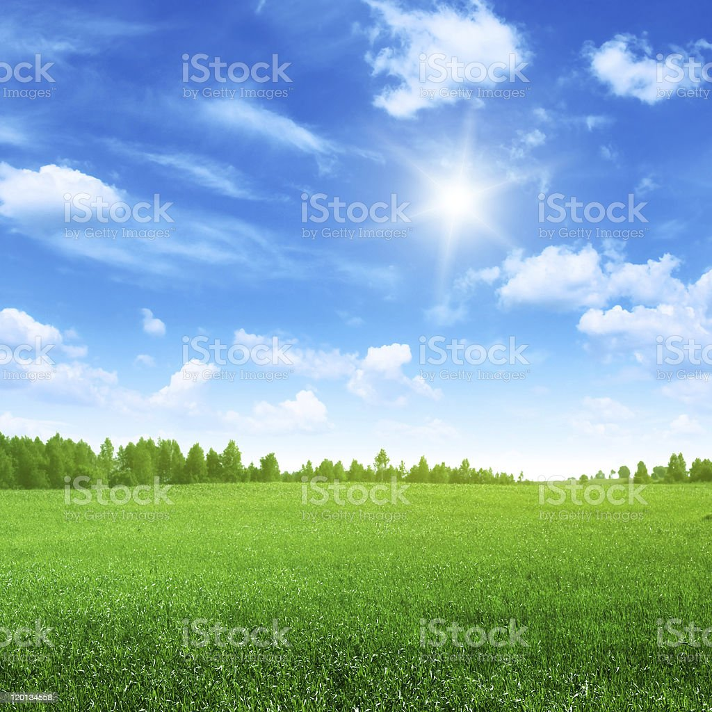 Green field with trees in the distance stock photo