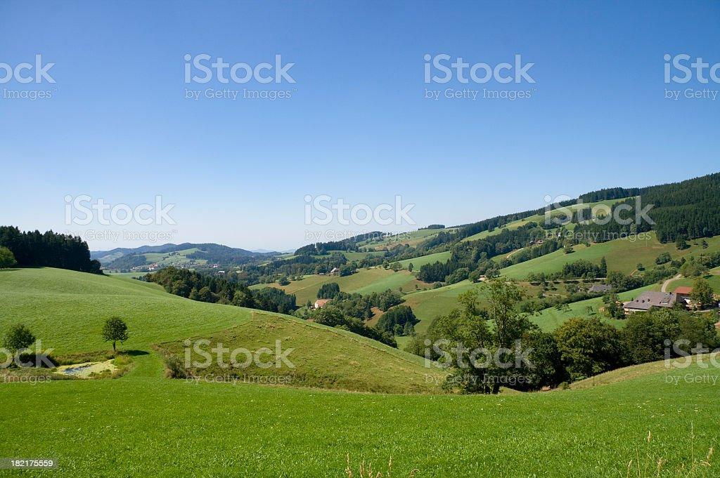 Green field with trees landscape stock photo