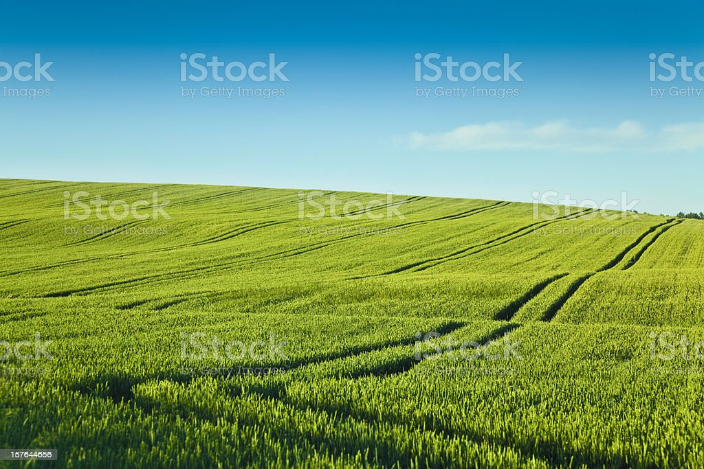 A green field with two lines going through it  stock photo