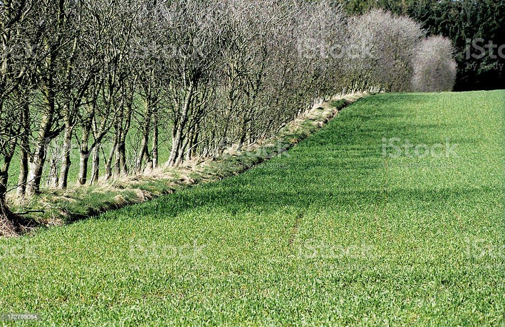 Green Field with Windbreak royalty-free stock photo