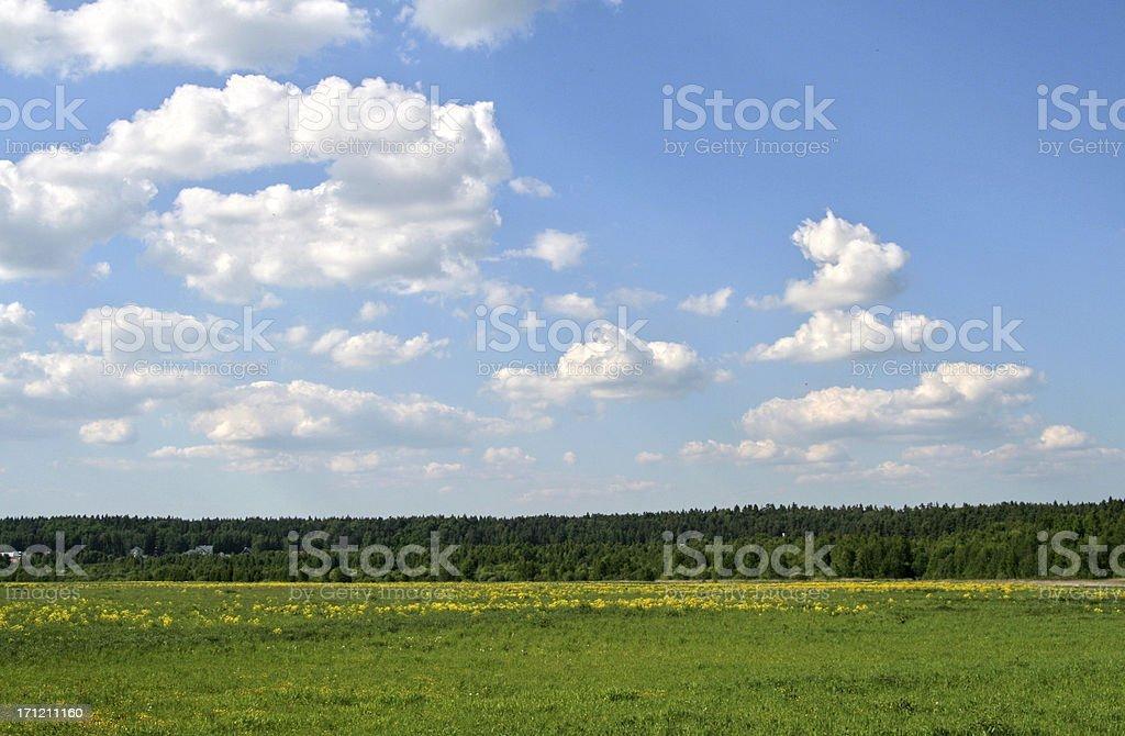 Green field, yellow flowers, blue sky royalty-free stock photo