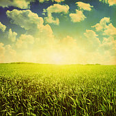 Green field,blue sky and sun in grunge style.