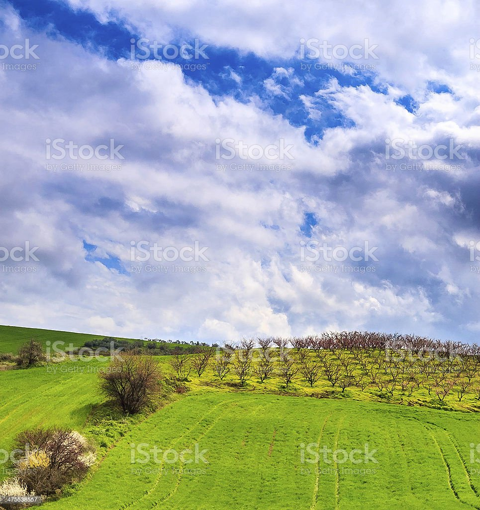 green fields and cherry trees royalty-free stock photo