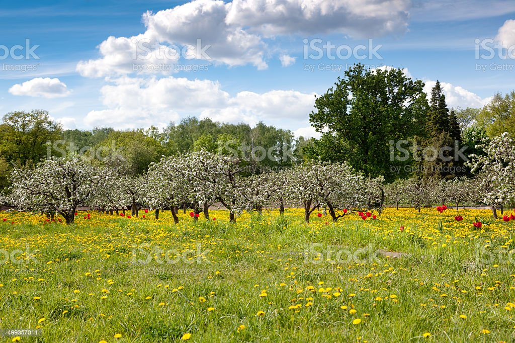 Green fields and flowering trees, spring, flowers, beauty stock photo