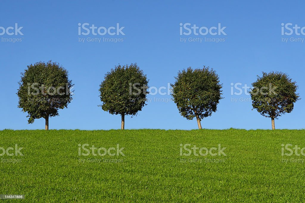 Green fields and trees royalty-free stock photo
