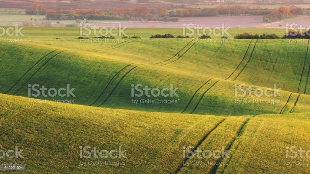 Green fields in the evening in South Moravia stock photo