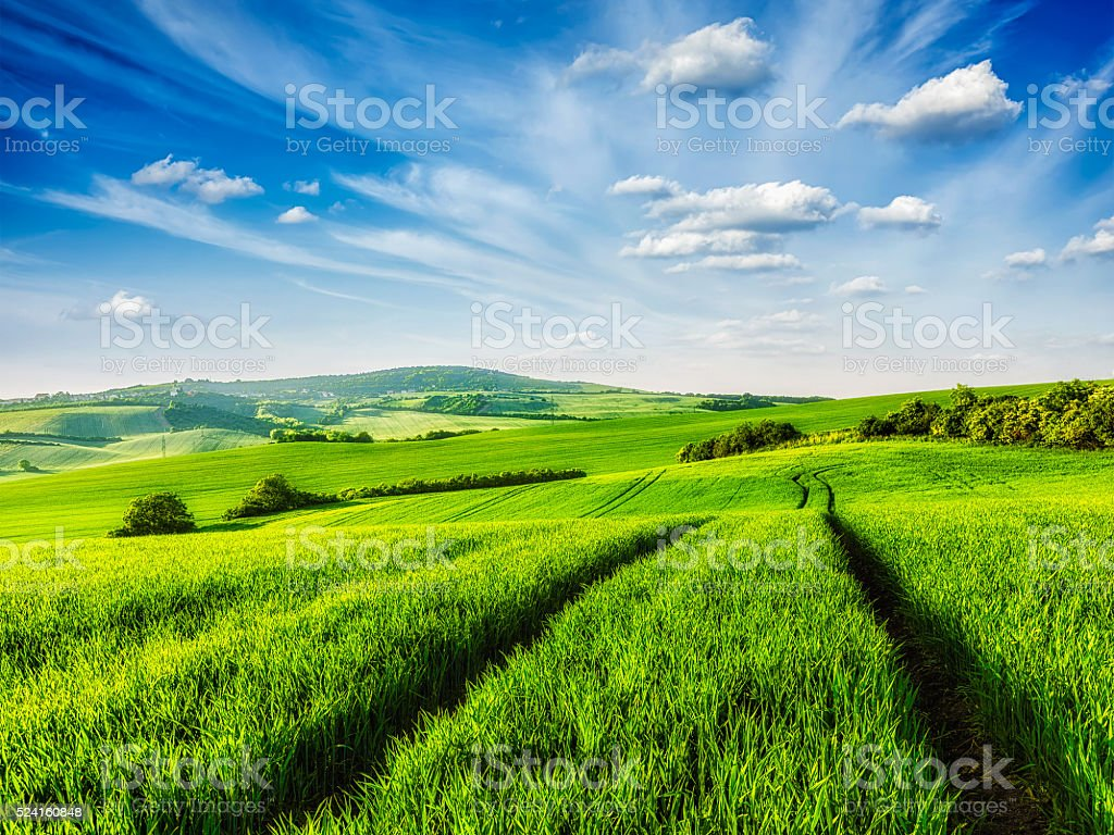 Green fields of Moravia stock photo