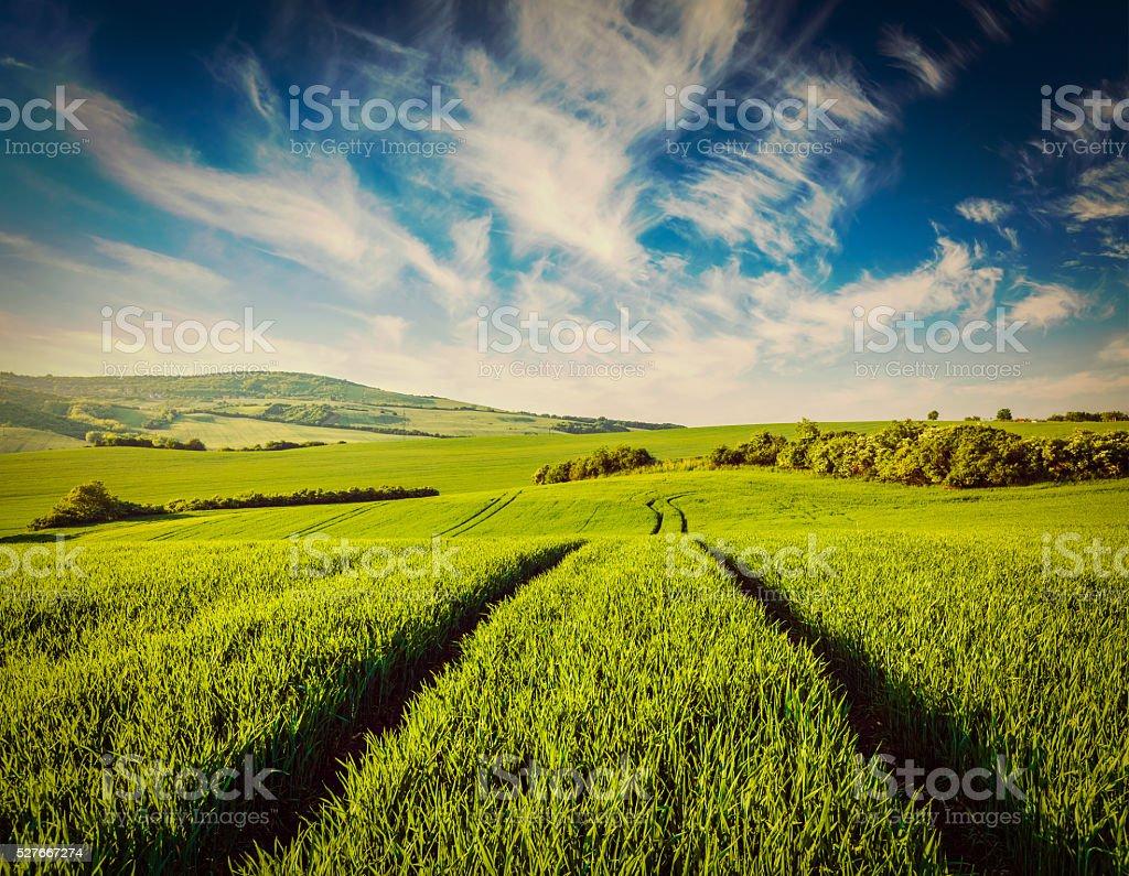Green fields of Moravia stock photo