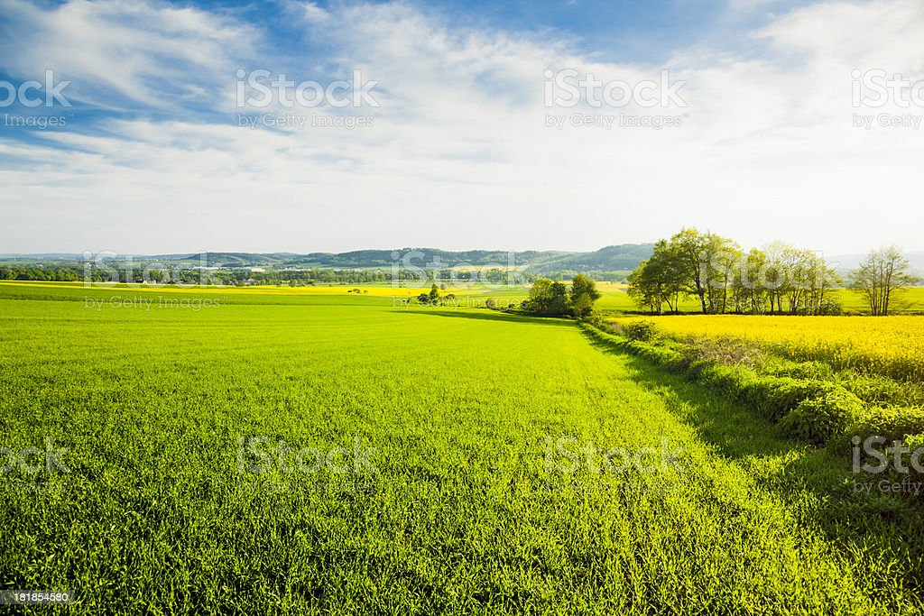Green fields royalty-free stock photo
