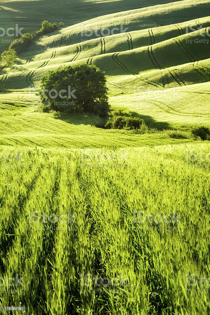 Green fields stretching to the valley in Tuscany royalty-free stock photo