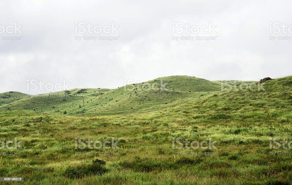 Green fild stock photo