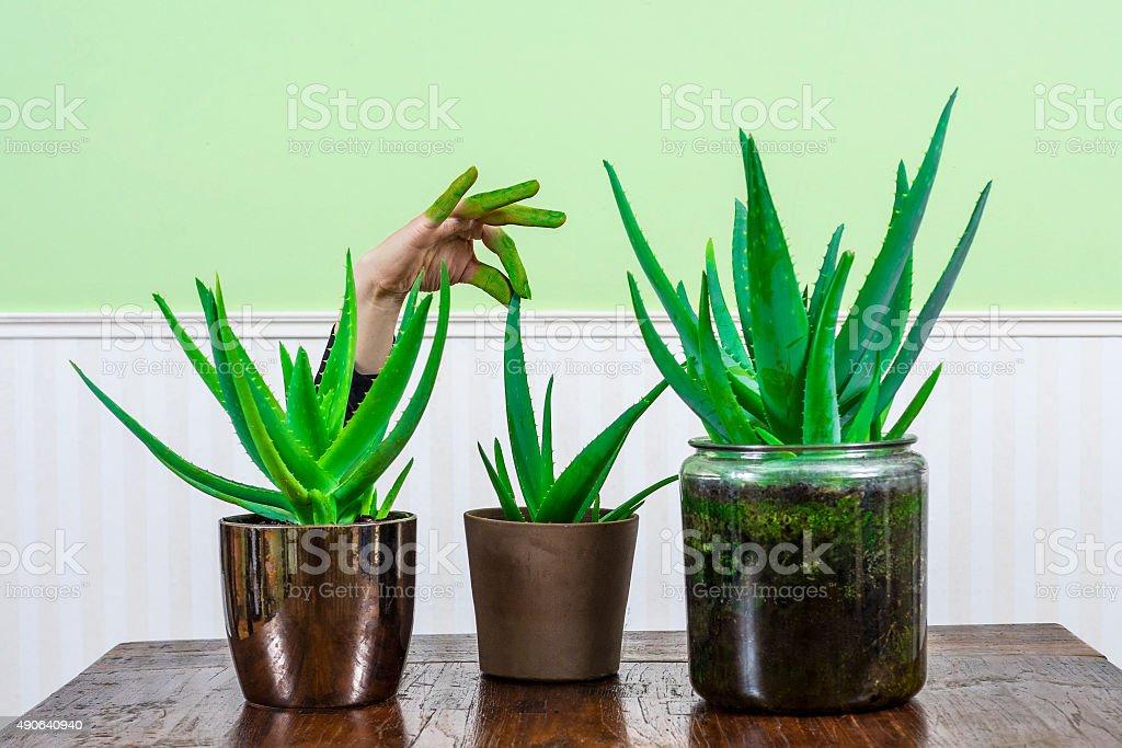 Green Fingers stock photo