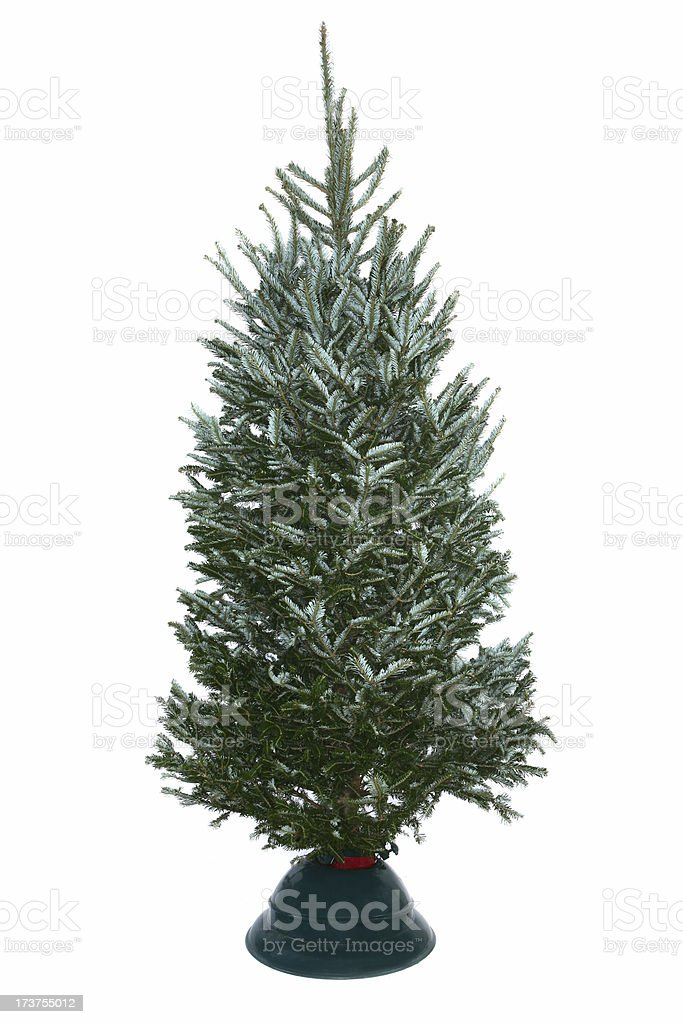 A green fir needle tree with a stand stock photo