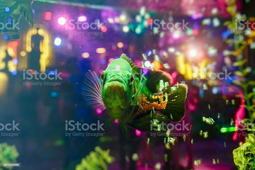 Green Fish stock photo