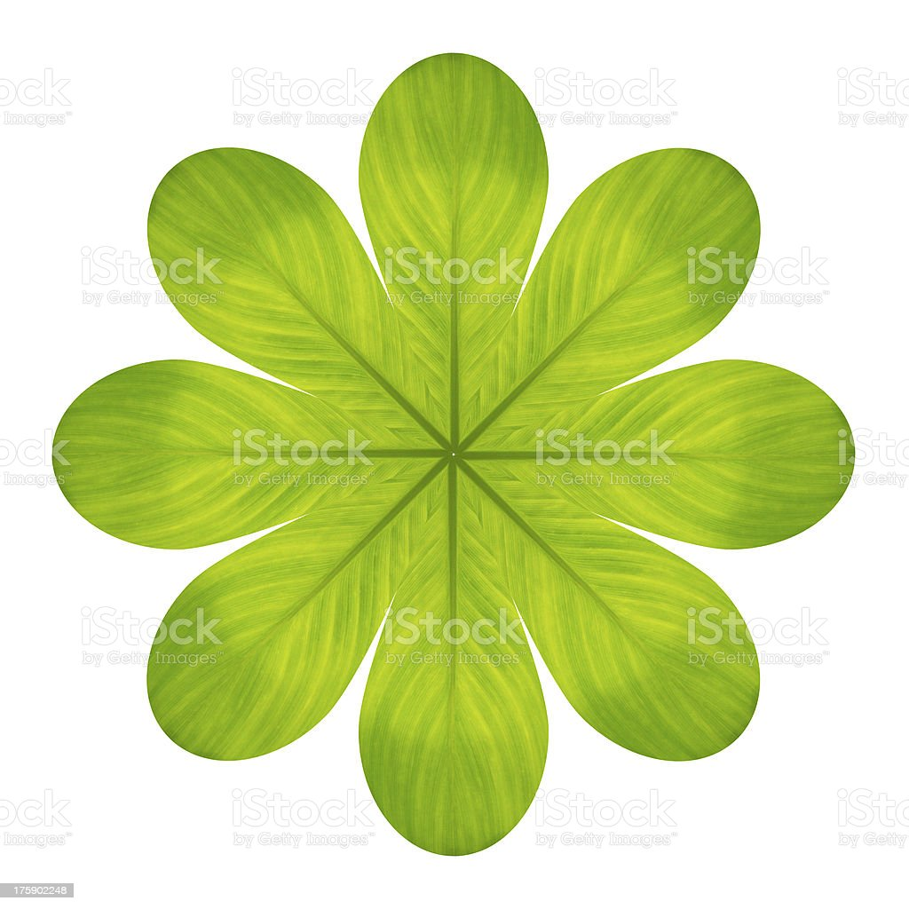 Green flower from leaf isolated on white royalty-free stock photo