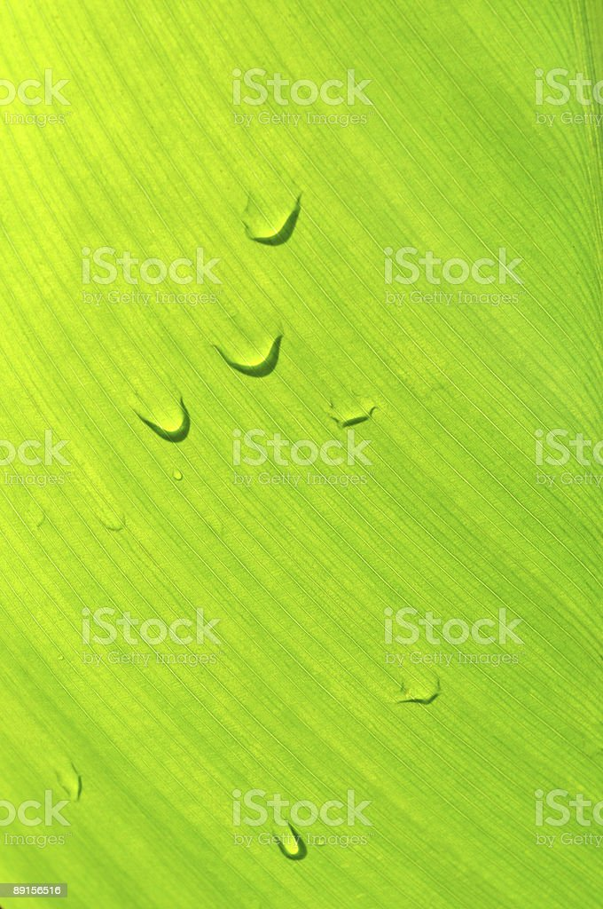 green flower leaf background with droplets stock photo