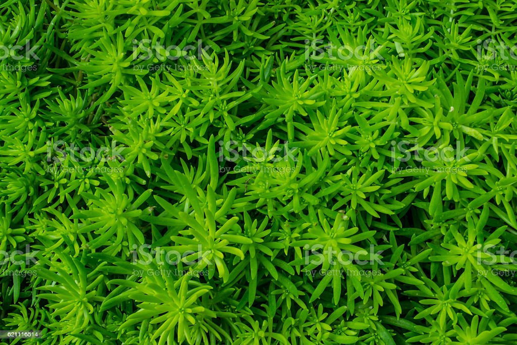 Green flowers and Vibrant color royalty-free stock photo