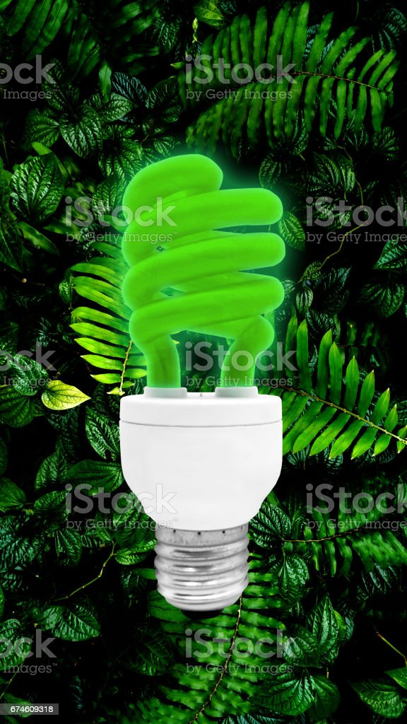 Green Fluorescent Light Bulb isolated on leaf background with clipping path stock photo