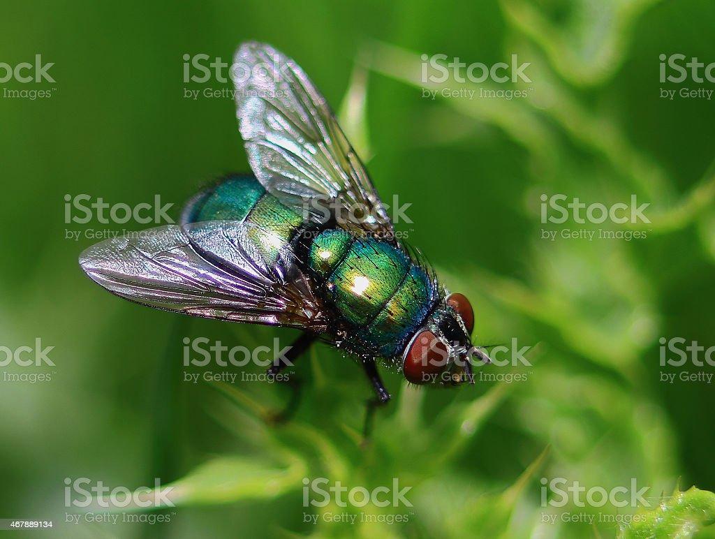 green fly in macro stock photo