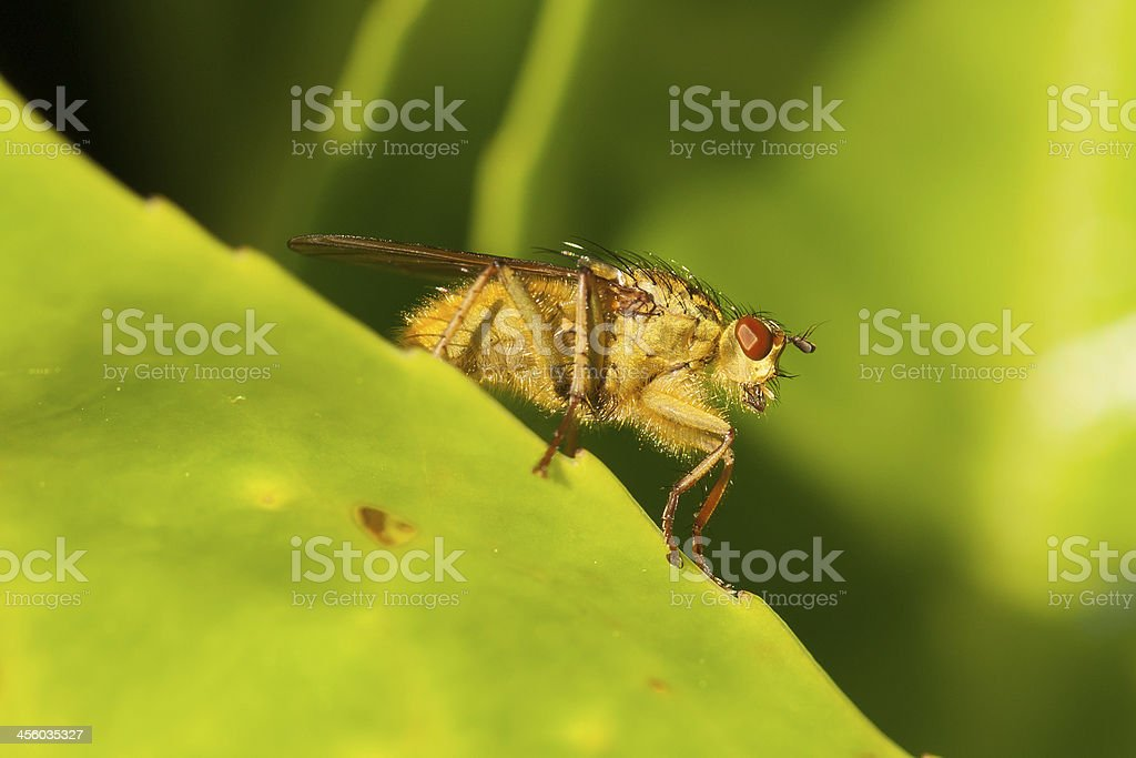 Green fly on a leaf royalty-free stock photo