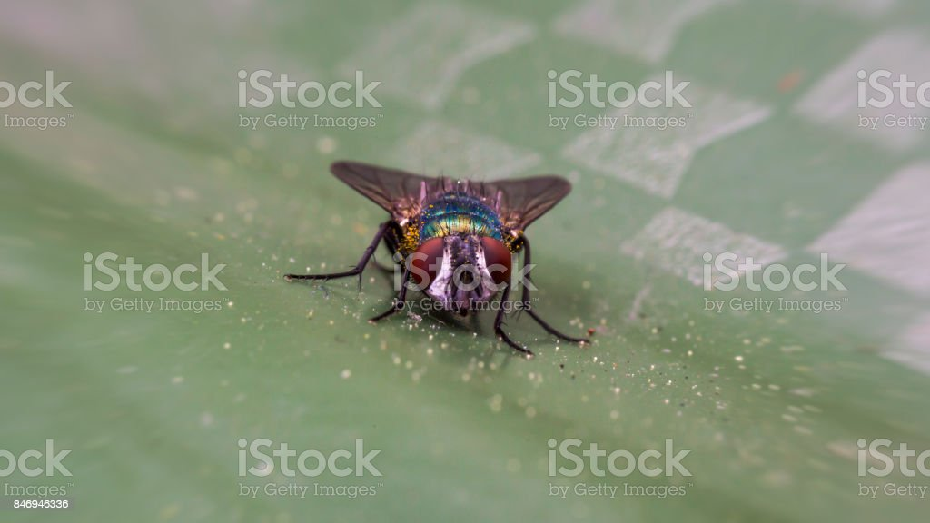 Green fly stock photo