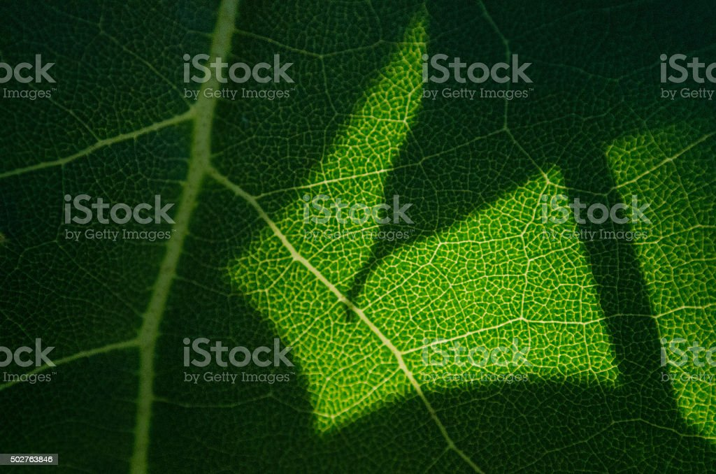 green foliage abstract close up background stock photo