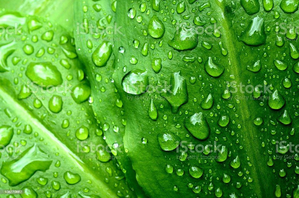 Green Foliage and rain drops background royalty-free stock photo