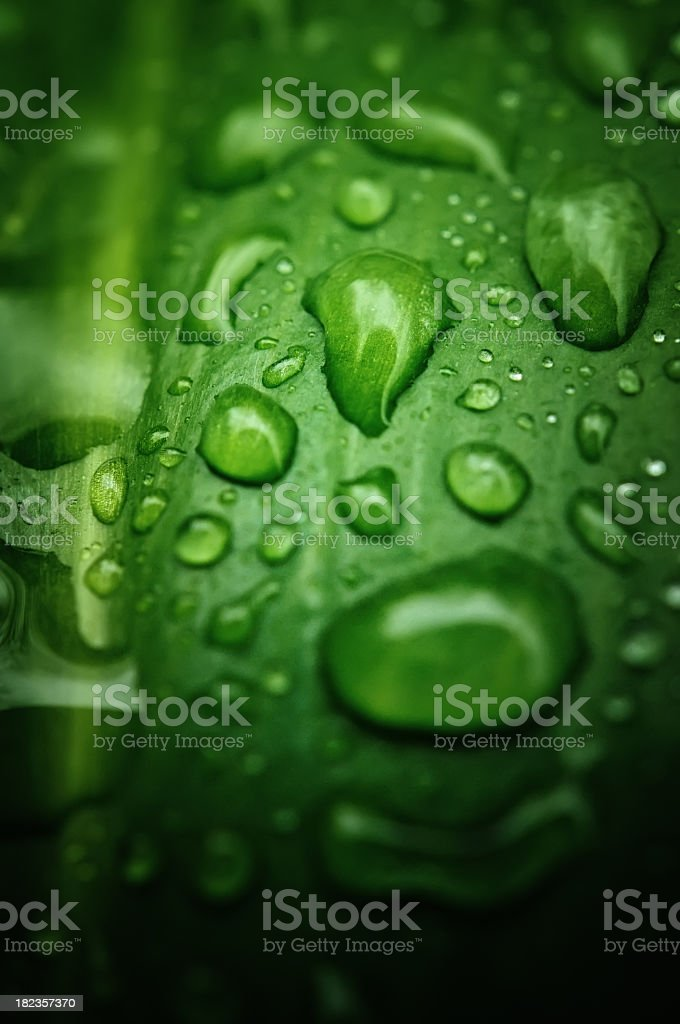 Green Foliage and rain drops background royalty-free stock photo
