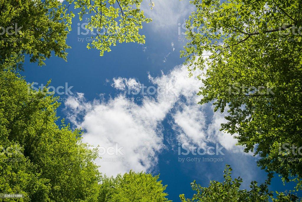green foliage and sky stock photo