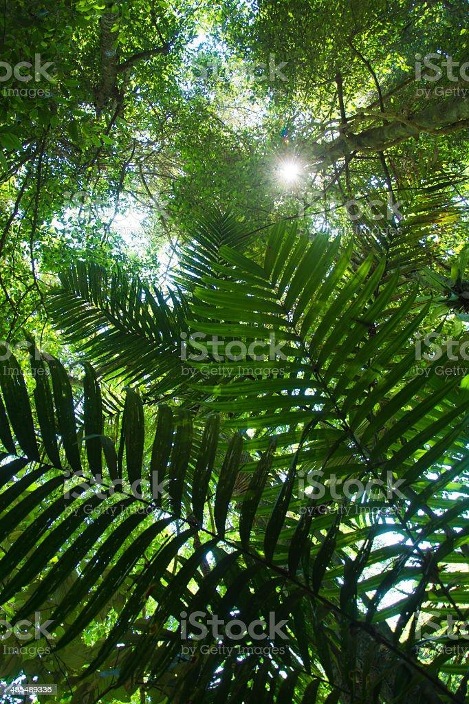 Green foliage in the jungle stock photo