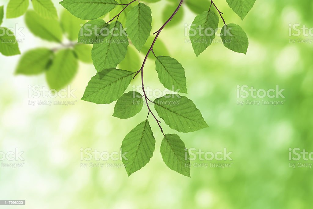 Green Foliage stock photo
