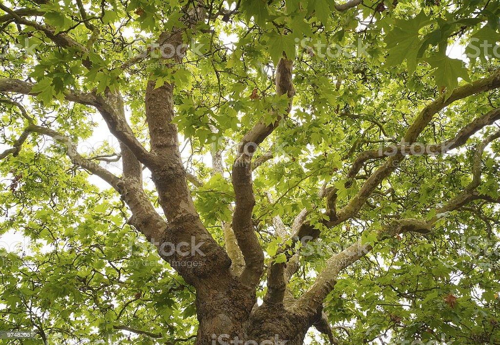 Green foliage royalty-free stock photo